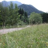 Schneebergland Rallye 2013 Sonderprüfung 11 Schwarzau Blumen Schotter Straße