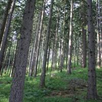 Schneebergland Rallye 2013 Bäume Wald Start SP 11 Schwarzau